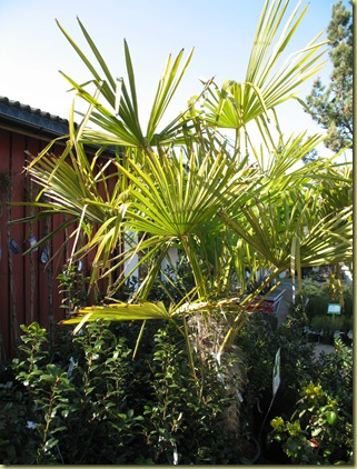 Easter Palms