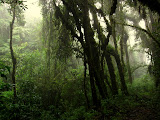 Cloud forest on Llatapata