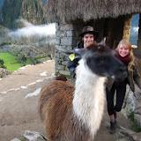Come here llama!