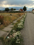 Puerto Natales street. The smaller roads are unsealed.