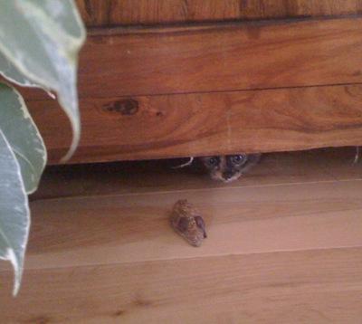 cat-pics-20.092010-017