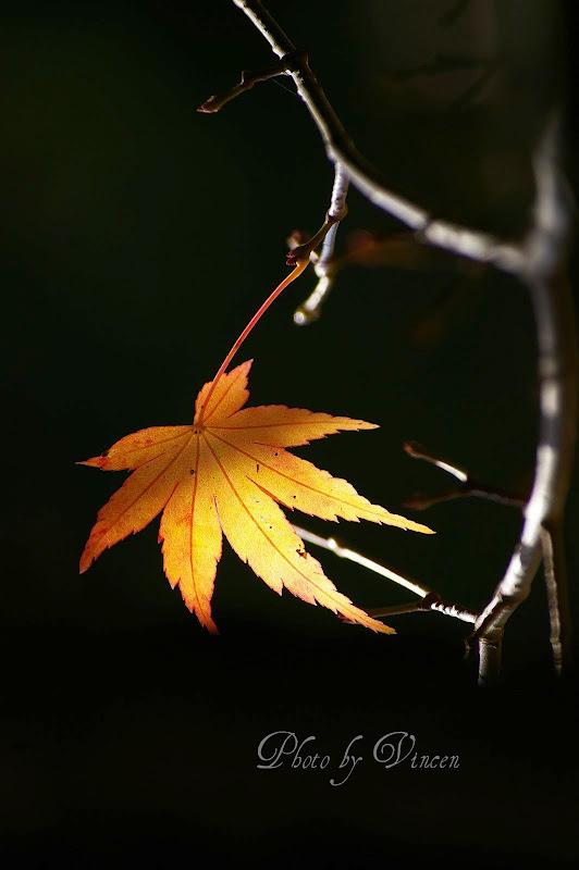 合歡山-火燒雲+福壽山-楓紅  一日爆肝行