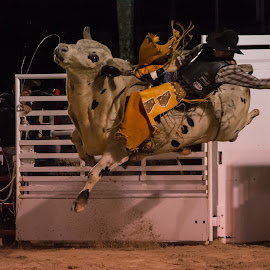 Bull Riding by Stephanie Snow - Sports & Fitness Rodeo/Bull Riding