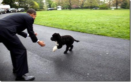 President Obama Dog4