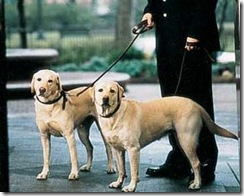 dog walker_Argentina_Petsventura
