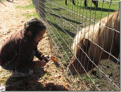 Scholz Pumpkin Farm 119