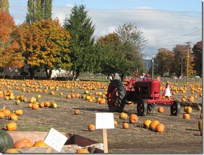 Scholz Pumpkin Farm 046