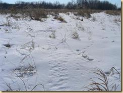 eagle marsh, feb 1, 09 (5) (Medium)