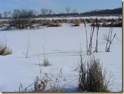 eagle marsh, feb 1, 09 (6) (Medium)