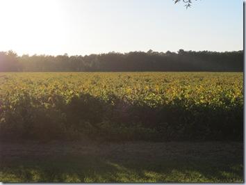 October farm 2010 062