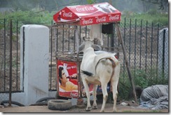 India 2010 -  Camino Delhi-Samode  , 14 de septiembre   05