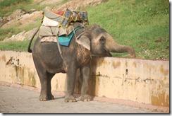 India 2010 -   Jaipur - Fuerte  Amber , 15 de septiembre   43