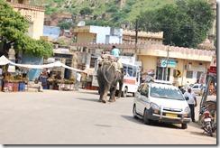 India 2010 -   Jaipur - Fuerte  Amber , 15 de septiembre   163