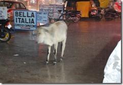 India 2010 -Kahjuraho  , 19 de septiembre   102