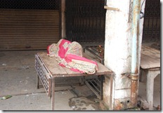 India 2010 -Varanasi  ,  paseo  en barca por el Ganges  - 21 de septiembre   233