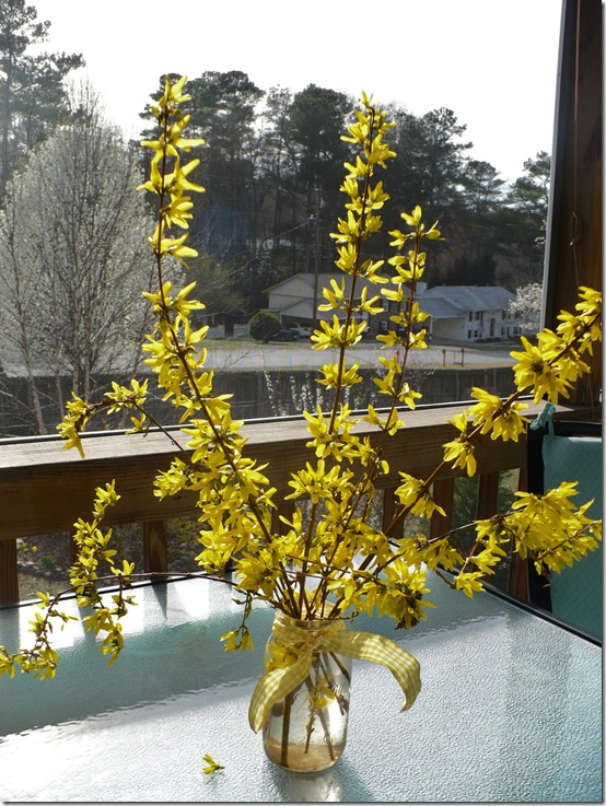 forsythiabranches