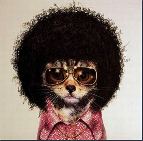 afro,cat,funny,pic-4f11cd7cd1f25753c01c1f7b4e94eb14_h