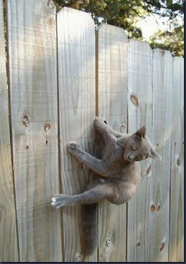 tdg4nmj-stucked-cat-21
