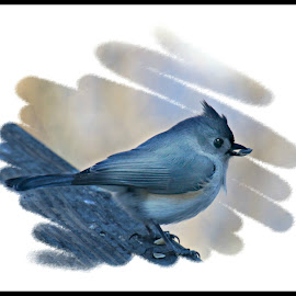 Tufted Titmouse through the frosted window. by Valerie Stein - Digital Art Animals (  )