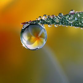 :: Big dews :: by Dedy Haryanto - Nature Up Close Natural Waterdrops (  )