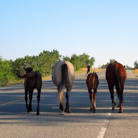 Horses of Glacier National Park by Dawn Schriebl Hartley - Animals Horses (  )