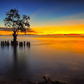 pohon bakau nirwana by Rico Sajoo - Landscapes Sunsets & Sunrises