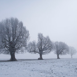 Trees in snow, Knebworth Park by Jeremy Lintott - Landscapes Weather ( icy, monochrome, black and white, silhouette, frost, line, freezing, winter, receding, cold, fog, ice, snow, trees, branches, mist )