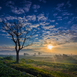 Welcome to the ricefields by Budi Astawa - Landscapes Sunsets & Sunrises ( sky, tree, cloud, ricefield, sunrise )