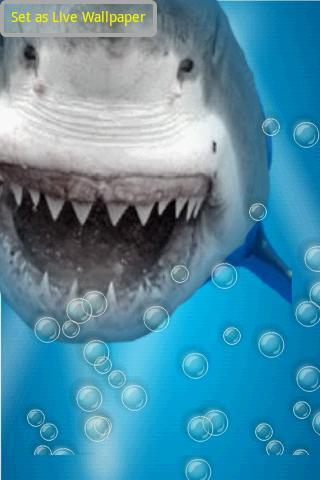 空腹のサメの水の反射