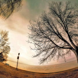 by Otto Mercik - City,  Street & Park  City Parks ( fisheye, tree, sunset )