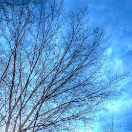 Painted Sky by Eric Witt - Novices Only Abstract ( clouds, sky, blue sky, hdr, backgrounds, trees )