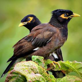 0 by Shibram Nag - Animals Birds