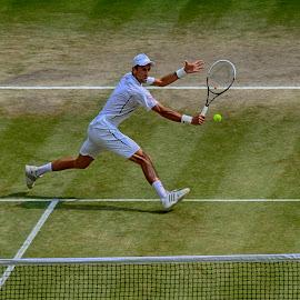 Novak by Phil Robson - Sports & Fitness Tennis ( final, novak, wimbledon, volley, tennis )