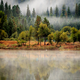 White Pines Calm by Paul Judy - Landscapes Forests ( fog, california, lake, white pines, mist )