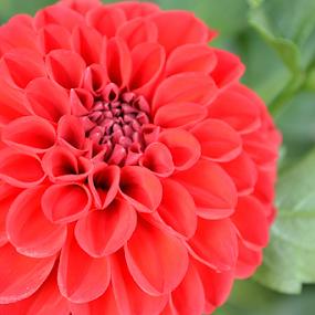 by Selçuk Özkan - Flowers Single Flower