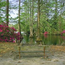 Peace on the pond by Cathy Harper - City,  Street & Park  City Parks ( park, lakes, lake, cityscape, cypress trees, city park, ponds, cypress knees, azalea, parks, cypress, pond, azaleas, public, bench, furniture, object )