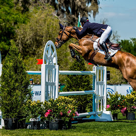 Equine Power by Lynn Wiezycki - Sports & Fitness Other Sports ( fence, horse, power, live oak cde, showjumping, jumper )