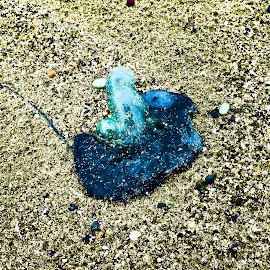 Blue Sea Creature by Marion Metz - Digital Art Things ( seashore, creature, blue, sea, ocean, beach, stones )