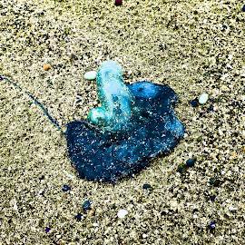 Blue Sea Creature by Marion Metz - Digital Art Things ( seashore, creature, blue, sea, ocean, beach, stones )