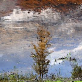 Landscape - reflected by Almir Džanović - Landscapes Weather ( reflection, tree, wather, landscape )