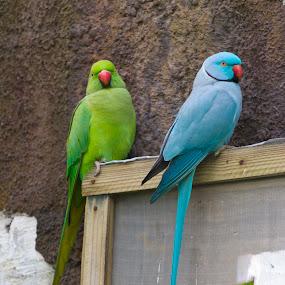 Just sitting around by Malcolm Duke - Animals Birds (  )