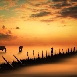 Golden Dawn by Jennifer Woodward - Digital Art Animals ( animals, dawn, horses, silhouette, sunset, sunrise, landscape, dusk )