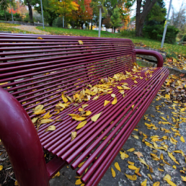 by Dipali S - Artistic Objects Furniture ( furnoture, benches, park, metal, autumn, artistic, city )