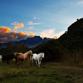 Drakensberg horses by Mike Morgan - Animals Horses