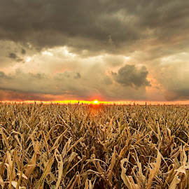 Crop(ped) Field by Emin Can - Landscapes Prairies, Meadows & Fields ( clouds, cloudy sunset, sunset, sunset on corn field, harvested corn field, corn field )