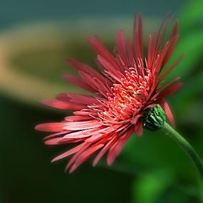 by Keple MN - Flowers Flower Gardens ( home.outdoor, morning, shade, garden, flower )