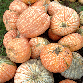 Mexican Pumpkins by Donna Chapman-Domitrek - Food & Drink Fruits & Vegetables ( assorted, pumpkins, verigated, white, oraange )