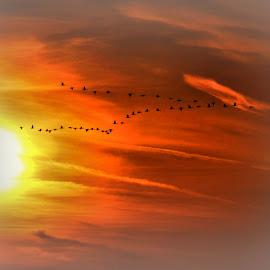 going south by Barry Van de Laar - Landscapes Sunsets & Sunrises ( clouds, nature, sunset, landscapes, birds )