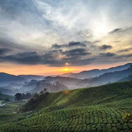 sunrise at tea farm by Gary Yip - Landscapes Prairies, Meadows & Fields ( farm, cloud, sunrise, tea, sun )