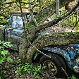 Forgotten Jeep by Nathan Porath - Transportation Automobiles ( farm, wisconsin, overgrown, tree, jeep, trees, abandoned )